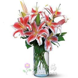 圆柱形花瓶图片香水百合-圆柱形花瓶图片