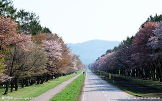乡村道路自然风光图片