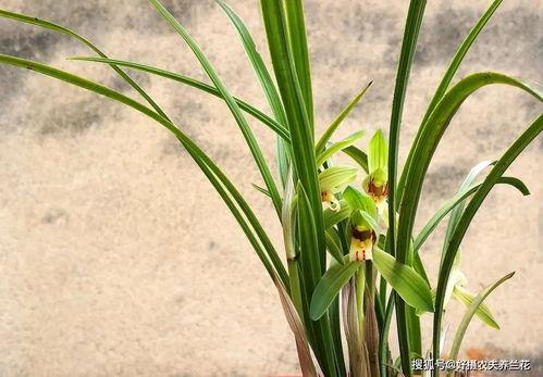 完全用松针腐殖土养花可以吗