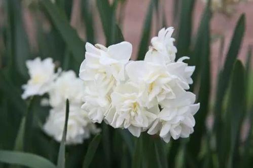 关于须根花卉的诗句