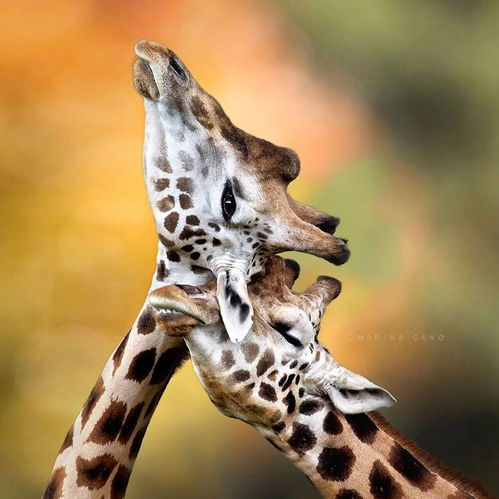小动物告诉你这个世界充满爱