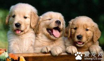 狗有寄生虫吗 狗狗身上毛囊虫详解