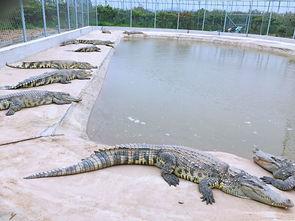 安庆野生动物园一期将于10月1日开园迎客