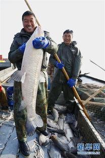 洪泽湖冬天可以钓鱼吗