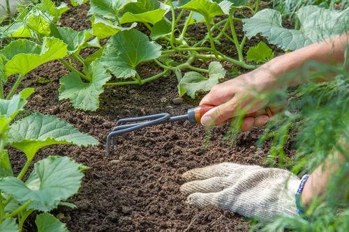 如何自制养花的肥料