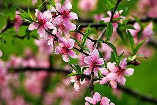 卧室里养花招桃花吗