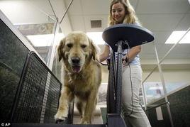 肥胖宠物开心减肥 美兴起宠物减肥夏令营
