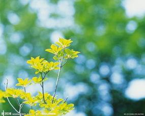 描写春天里树枝头的诗_描写春天里树的诗