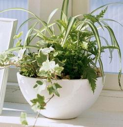 公司植物摆放有哪些风水讲究(公司摆设风水植物要注意什么)
