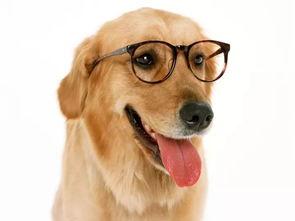 肖狗每月运程