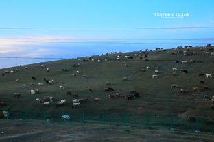 西域印记 自驾万里 环北疆 青海 甘肃 行迹