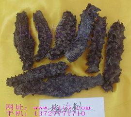 干海参的发法(干海参的发法)