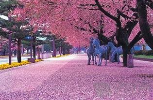 樱花树下的美景图片