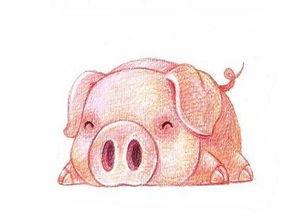搜狐公众平台 属猪人的一生一世 尤其是1971年的,看完谁说不哭