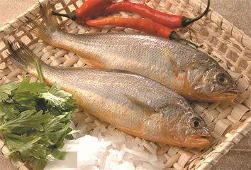 黄花鱼的功效与作用(与中药荆芥同食;吃鱼)