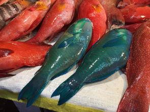 澳洲的鲍鱼 (abalone) 主要有三种:青边鲍、黑边鲍、和
