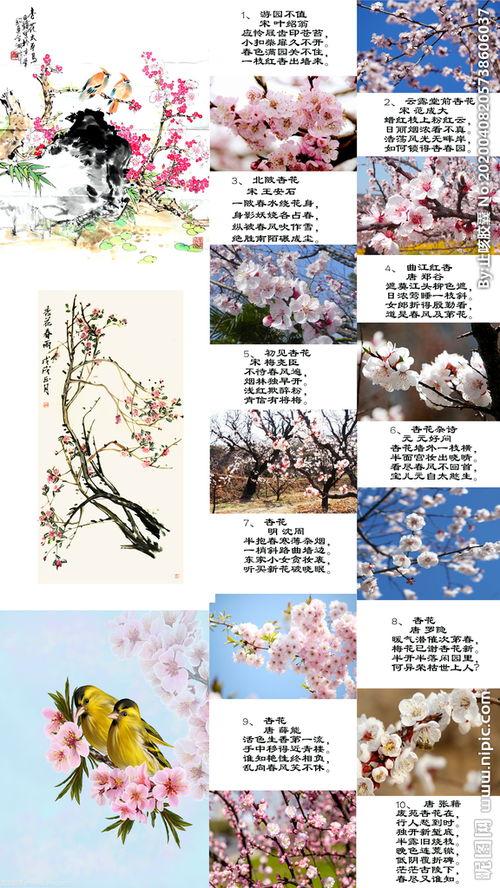 关于杏花的古诗句绝句