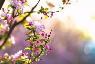 关于雨中海棠花的诗句