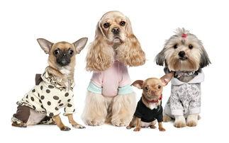 适合初次创业者创业的项目:宠物写真馆