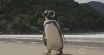救命之恩永生难忘 企鹅游5000英里看望老人