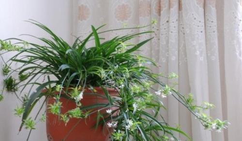 室里养花除甲醛
