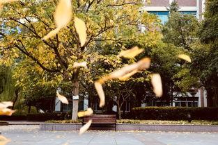 形容冬季落木萧萧的诗句