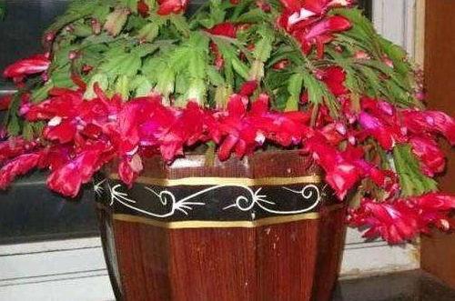 家里养花要放在一起吗