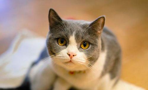猫咪的耳毛用拔吗