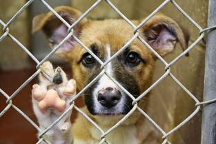 美国设置虐待动物登记处,公布犯罪者姓名照片供人民查看