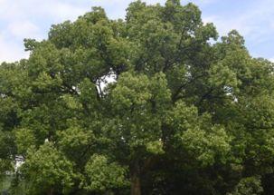 AABB描写形容花木的四字词语