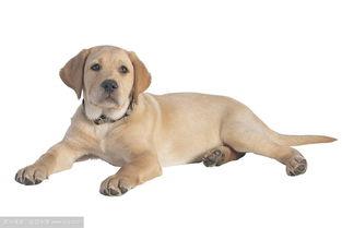 关于狗的好词语和句子