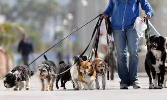 发现遛狗不拴绳的,公安部门将对养犬人进行警告,拒不改正的,公安部门将对养犬人处以50元罚款的处罚;对养犬人不及时清理犬只在户外排泄粪便的,在