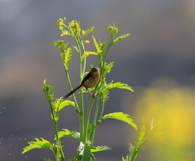 与鸟语花香形式一样描写春天的词语