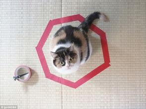 半圆形可以画成什么物品