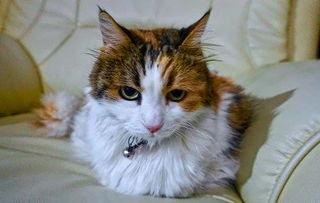 猫尿不出来症状