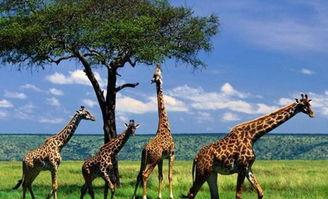 南非自助游 南非自助游攻略 南非自助游指南