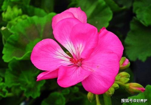 松果可以做养花材料