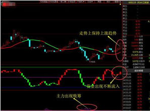 上海本地的龙头股票有那些