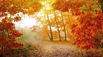 描写秋天的词语三个字_秋天的词语2个字