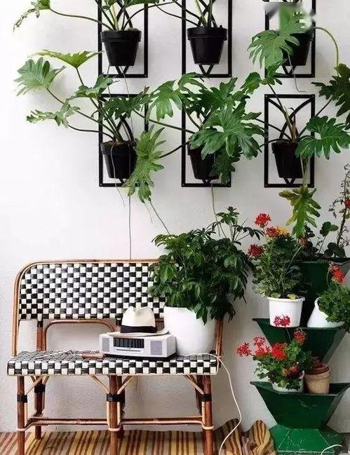 在室内养花应怎么护理