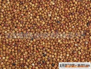 高粱-稻谷产品列表 007商务站 全球网上贸易平台 第52页