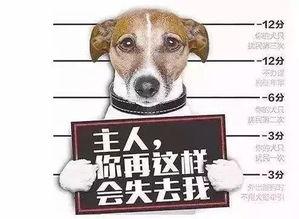 养犬计分制扣完12分吊销狗证