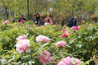 桃花节落幕,花儿不凋谢 别惆怅,因为庐阳区处处有花海