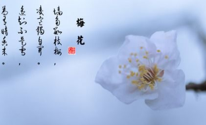 关于花的三句诗句
