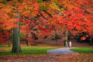 三级关于秋天的诗歌