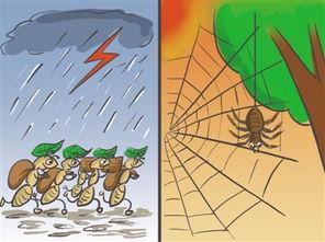 什么动物能预报天气谚语