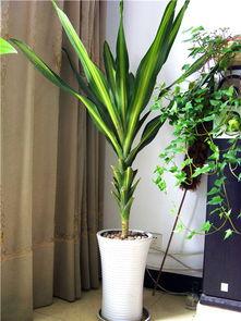 植物的五行有哪些(五行全部带土字的)