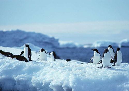 企鹅海洋生物动物世界雪地南极冰川
