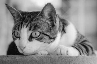四个月的猫咪不吃猫粮