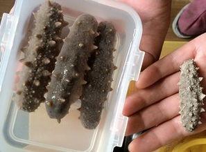淡干海参的泡发方法(何发制进口海参?其实)